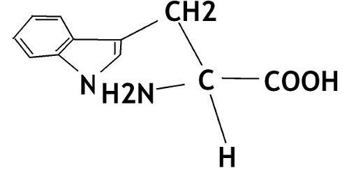 什么,蛋白质,蛋白质,一切,生命,物质,基础,人的,活动,与